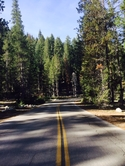 Sequoia National Park Camping Photo photo_24
