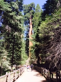 Sequoia National Park Camping Photo photo_34