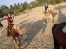Horseback Ride and Hollywood Photo 8105