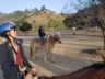 Horseback Ride and Hollywood Photo 8107